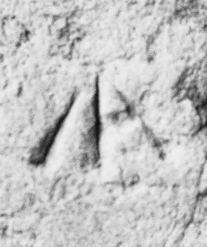 DSC04672 (1)